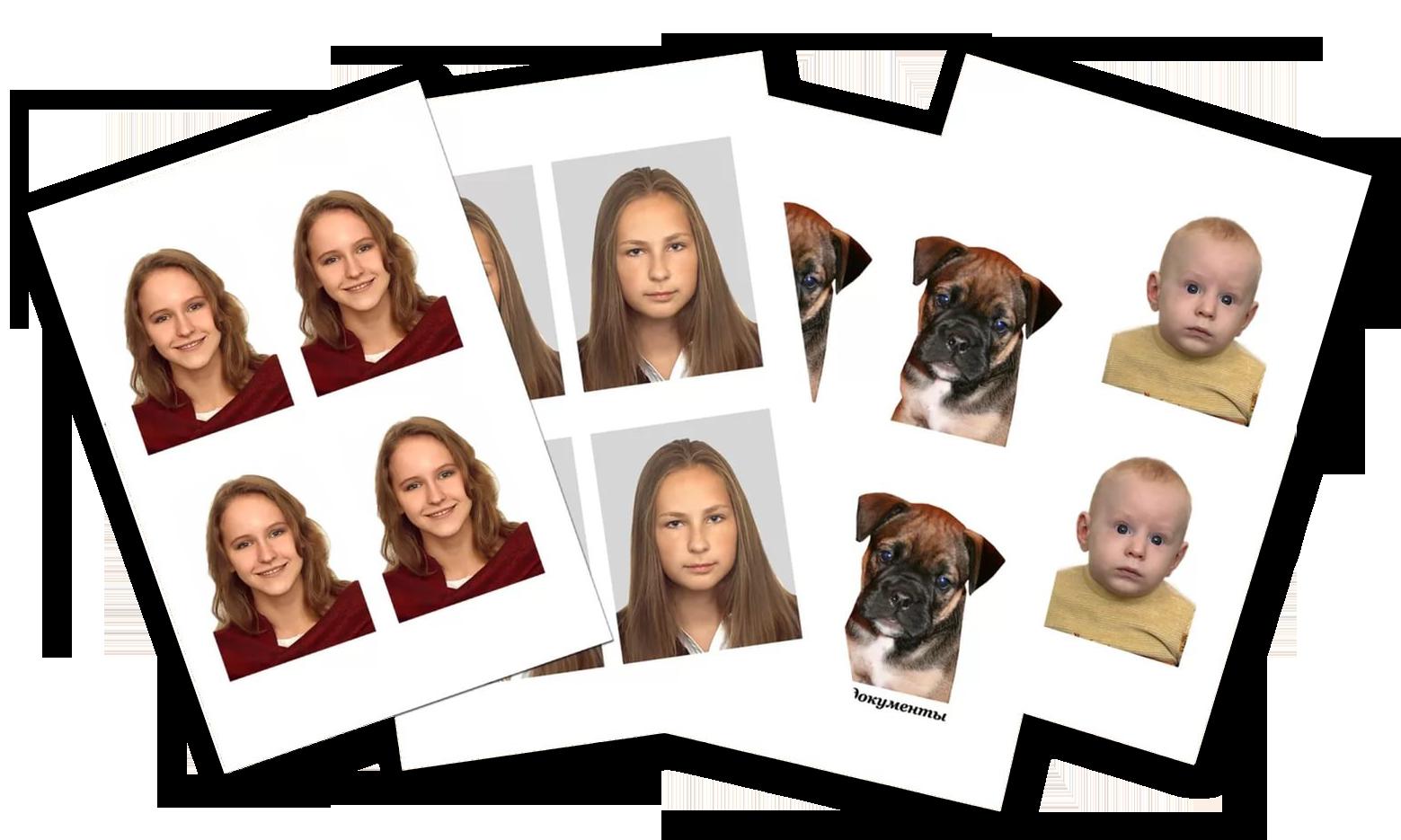 Passbild Bewerbungsfoto 84 bit Personalausweis, Führerschein, Reisepass